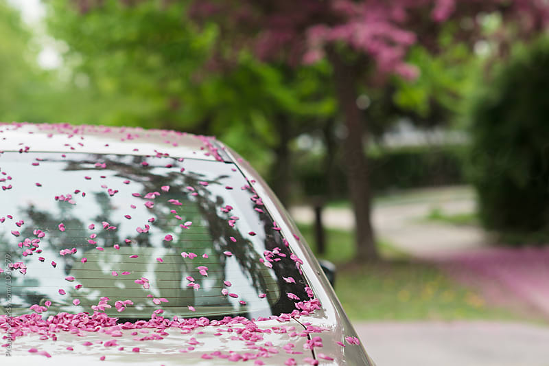 Apple blossoms on car by Preappy for Stocksy United