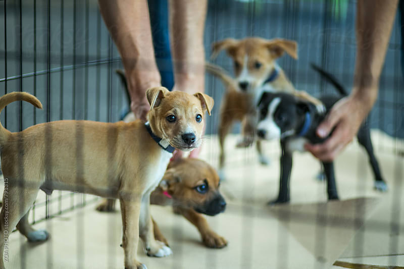 Caged puppies by ZOA PHOTO for Stocksy United