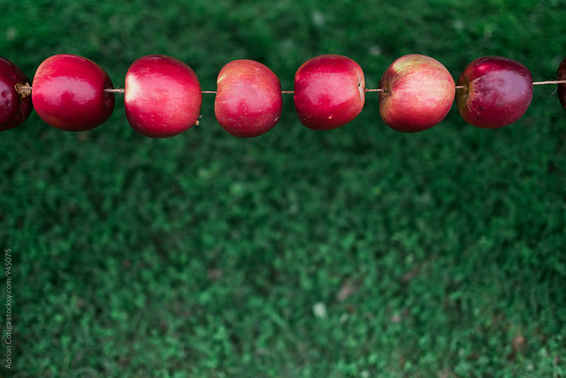 Row of red apples on a rope over a green background by Adrian Cotiga for Stocksy United