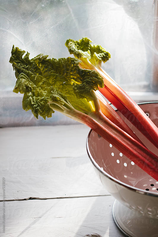 Forced rhubarb in a white colander. by Helen Rushbrook for Stocksy United