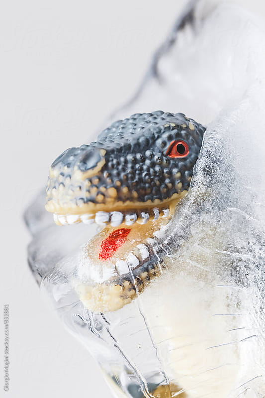 Dinosaur Toy Frozen in a Block of Ice by Giorgio Magini for Stocksy United