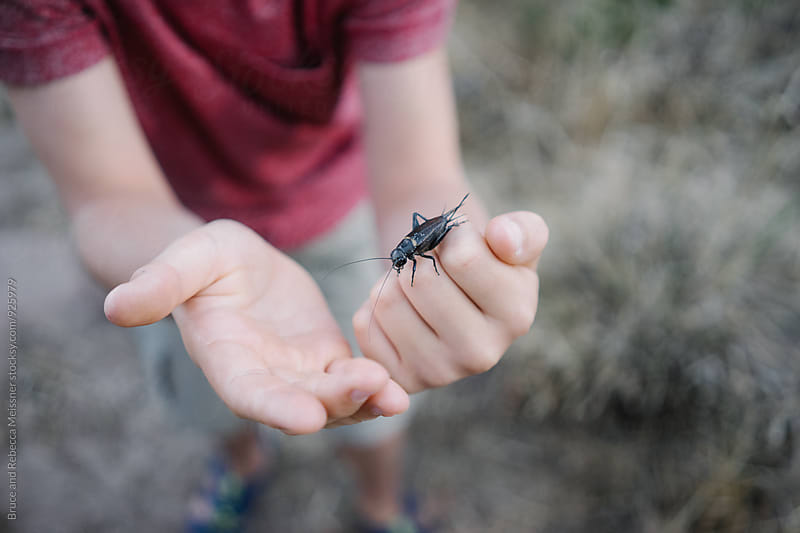 Bug on Boys Hand by Bruce and Rebecca Meissner for Stocksy United