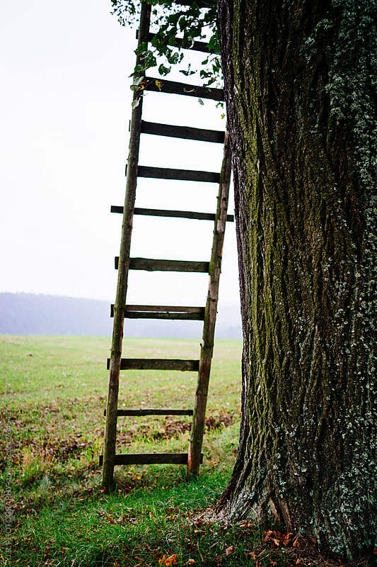 Wooden ladder by J.R. PHOTOGRAPHY for Stocksy United