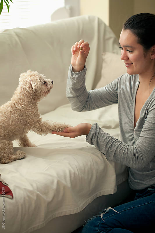 Dog Tricks by Jill Chen for Stocksy United