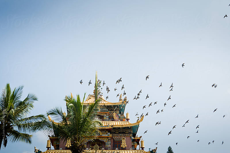 Birds flying above a temple by Christine Hewitt for Stocksy United