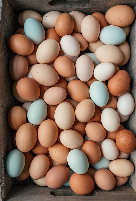 Eggs by Melanie DeFazio for Stocksy United