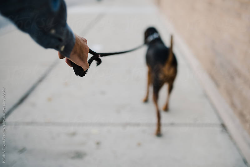 Dog walking on leash by Isaiah & Taylor Photography for Stocksy United