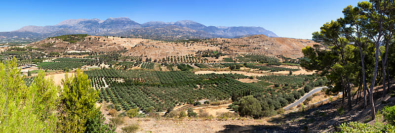 Olive tree plantations in the mountains of Crete, Greece by Ivan Bastien for Stocksy United