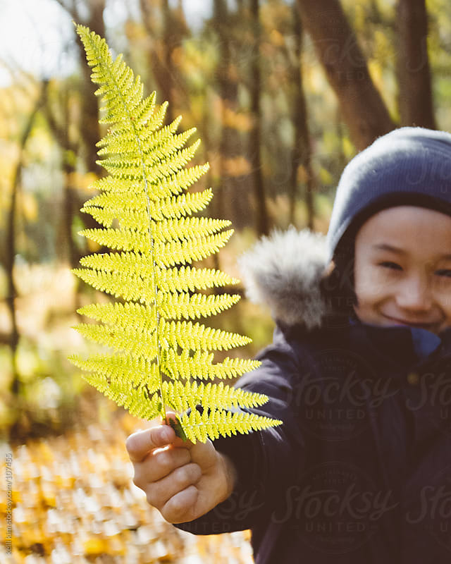 A happy child holds up fern branch by kelli kim for Stocksy United