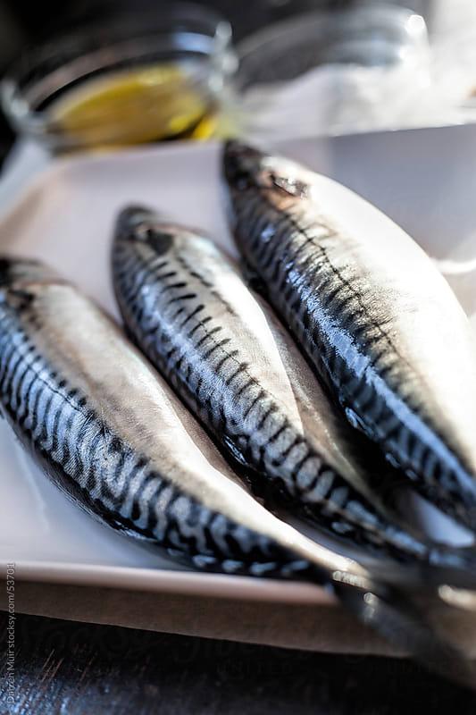 Fresh mackerel on a plate. by Darren Muir for Stocksy United