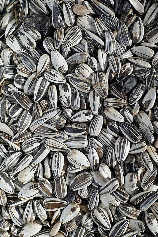Pile of sunflower seeds by Marcel for Stocksy United