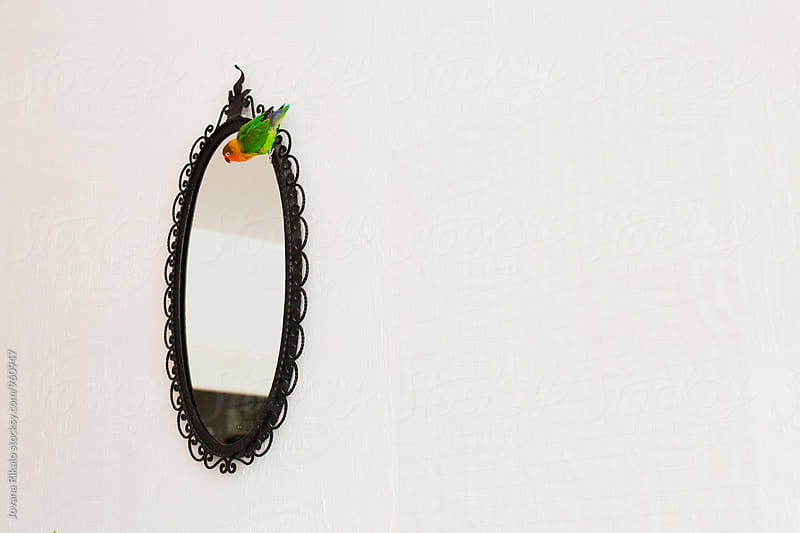 Parrot on a mirror by Jovana Rikalo for Stocksy United