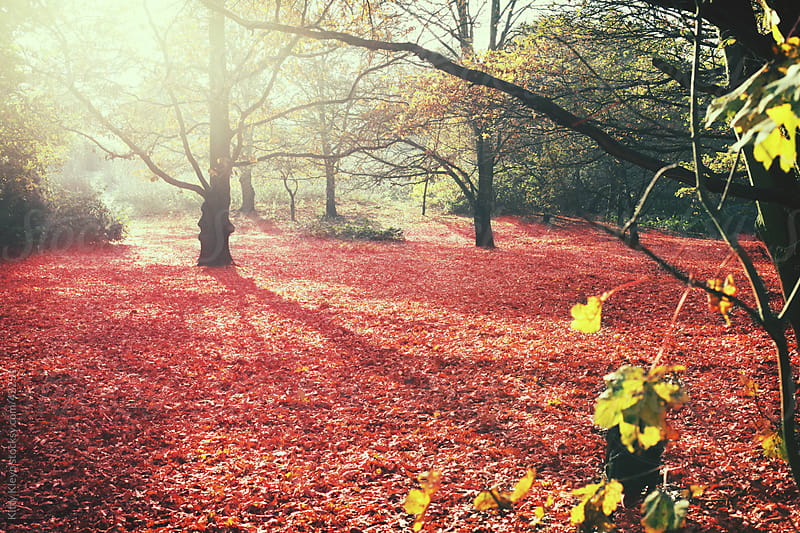 Autumnal Woods by Kitty Kleyn for Stocksy United