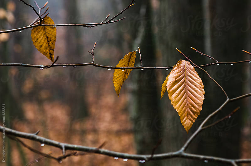 close-up of elm leaf on a wet winter day by Deirdre Malfatto for Stocksy United