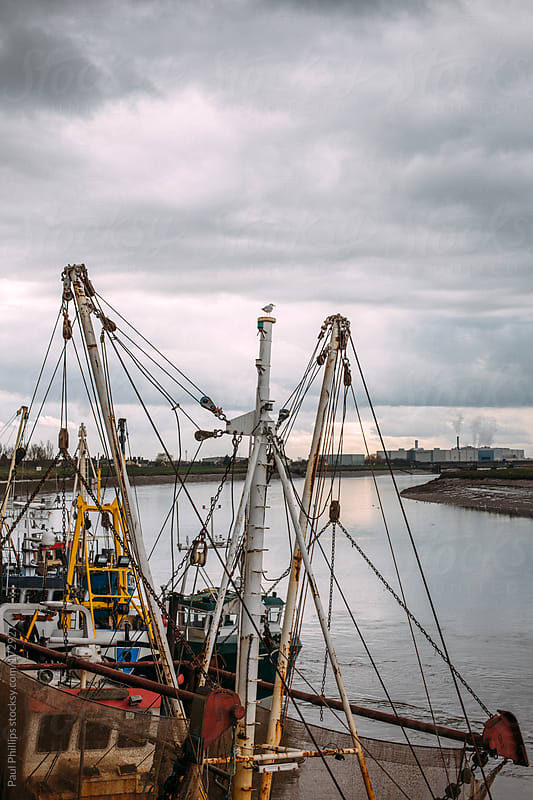 Estuary with fishing boat masts in the foreground and industry in the background. Seagull on mast by Paul Phillips for Stocksy United