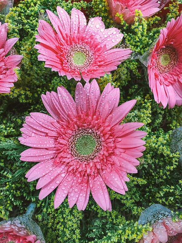 flowers by Pansfun Images for Stocksy United