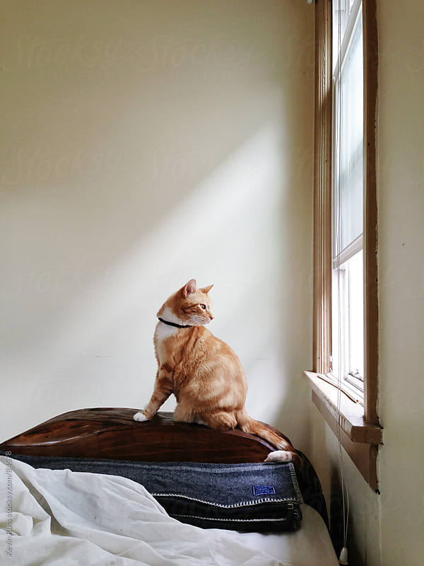 Cat Looking Out Window by Kevin Russ for Stocksy United