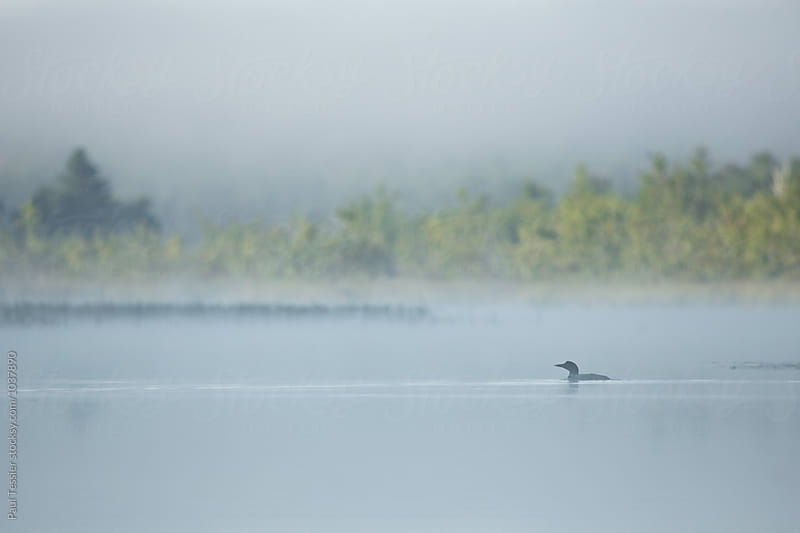 Loon in Fog by Paul Tessier for Stocksy United