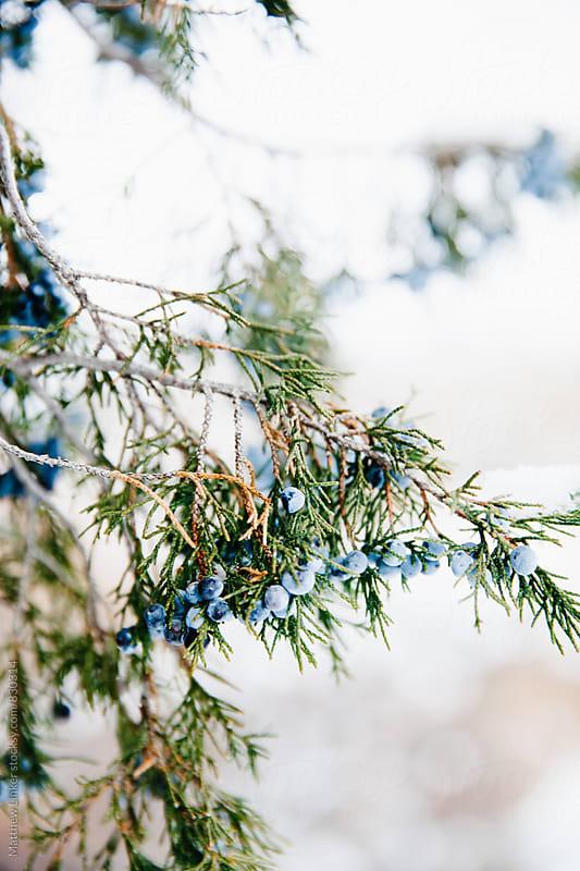 Fresh winter snow  by Matthew Linker for Stocksy United