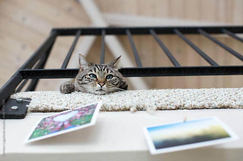 Siamese cat on a balcony by Carolyn Lagattuta for Stocksy United