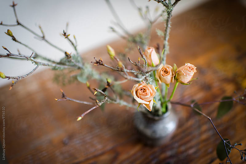Winter Rose Arrangement by Lindsay Upson for Stocksy United