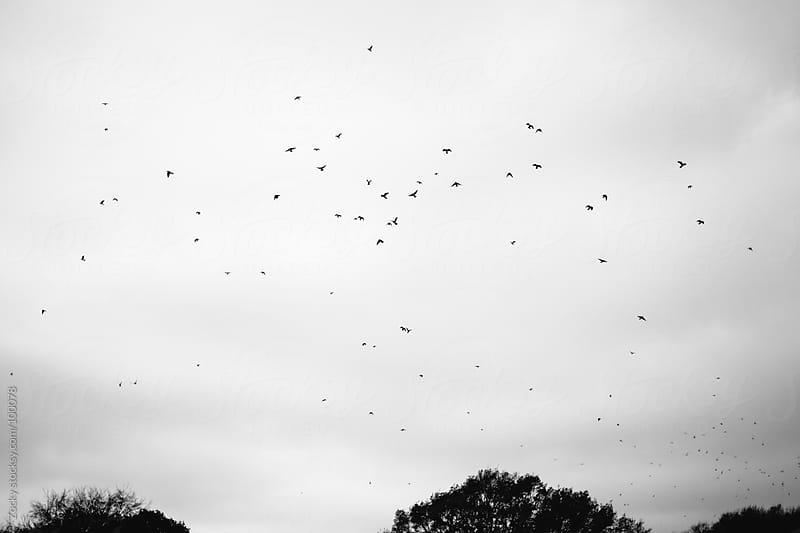 Birds In Flight by Zocky for Stocksy United
