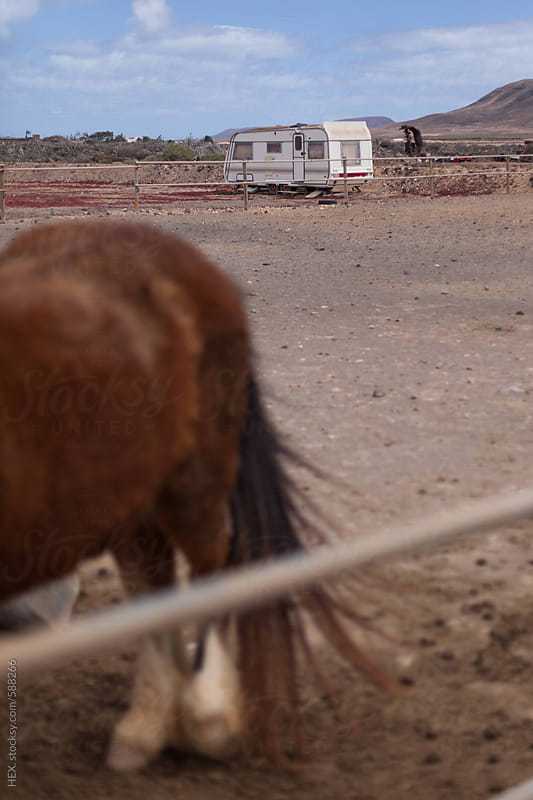 Horse Portrait in a Desert Stable . by HEX. for Stocksy United