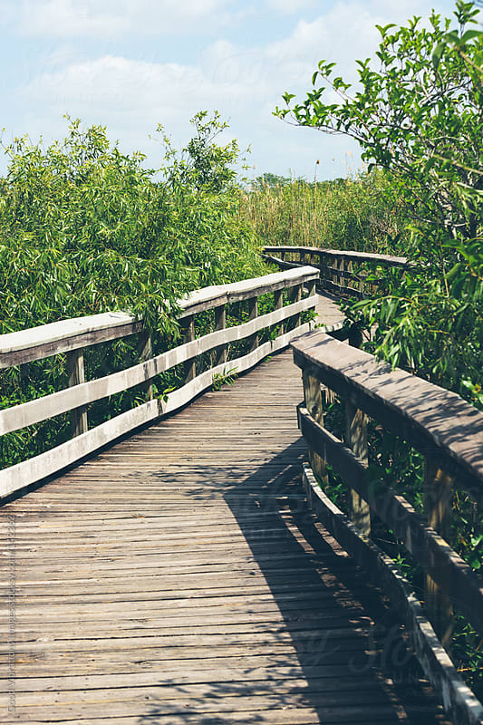 Boardwalk in The Everglades by Good Vibrations Images for Stocksy United