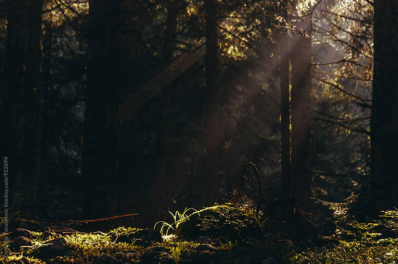 Morning in the forest by Dimitrije Tanaskovic for Stocksy United