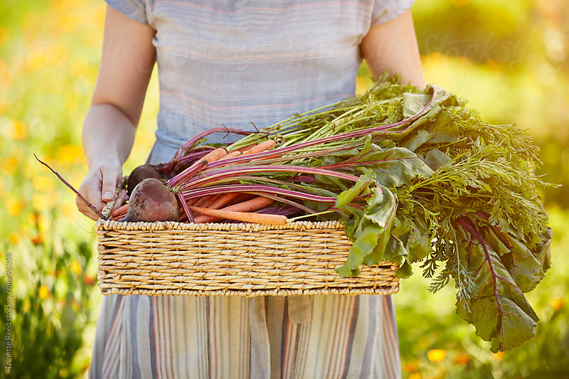 Woman farmer holding basket of organic veggies at her farm by Trinette Reed for Stocksy United