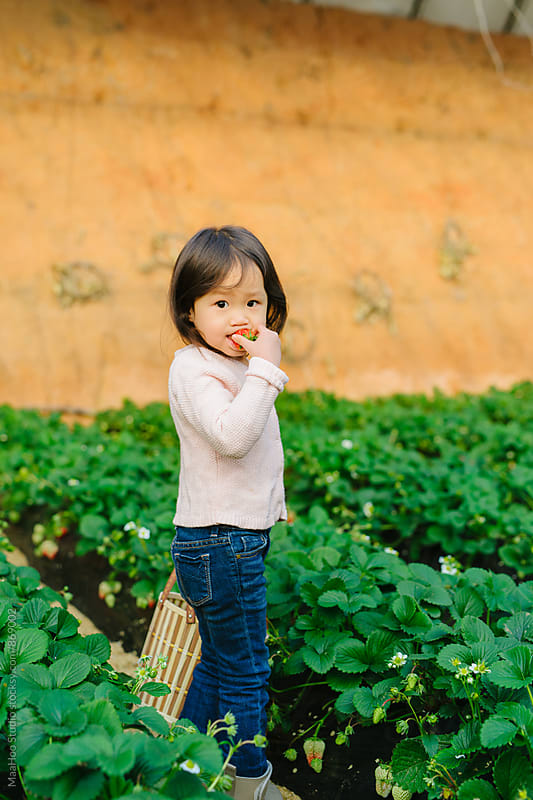 Young girl eating strawberry in greenhouse by Maa Hoo for Stocksy United