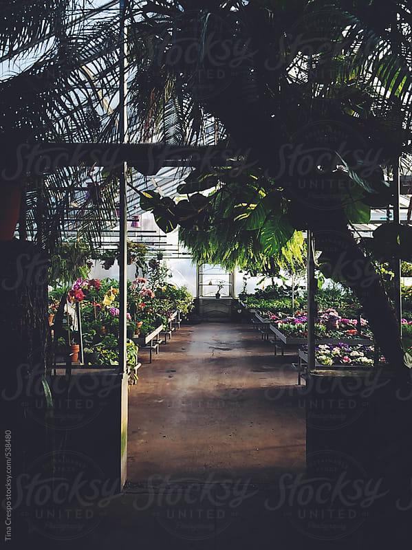 Exotic Plant Hallway by Tina Crespo for Stocksy United