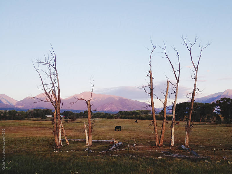 Dead Tree Mountain Farm by Kevin Russ for Stocksy United