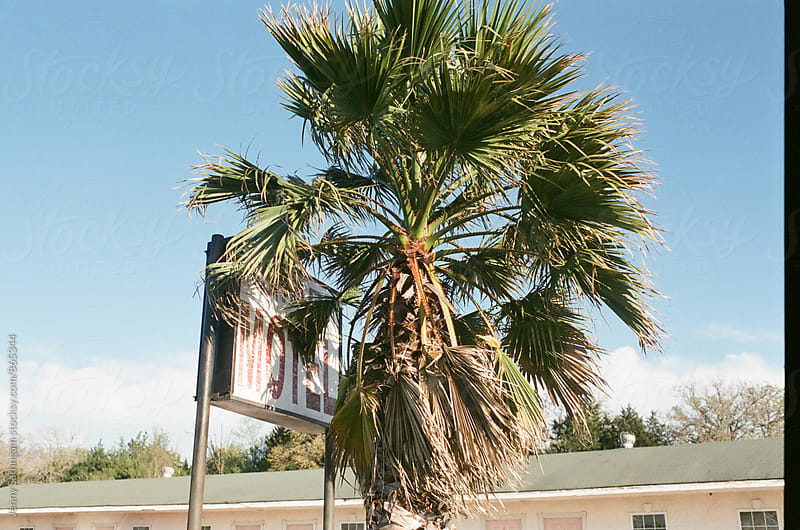 Motel sign covered by Palm on 35mm film by Jenny Sathngam for Stocksy United