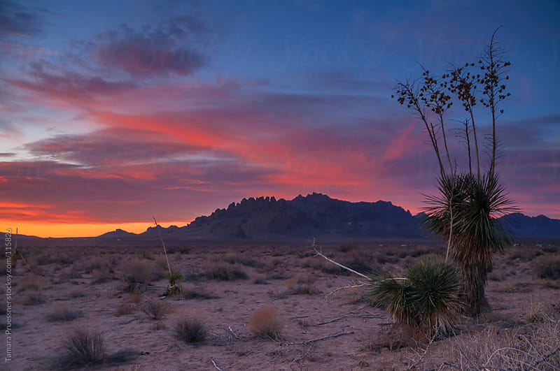 Desert Sunrise In New Mexico by Tamara Pruessner for Stocksy United