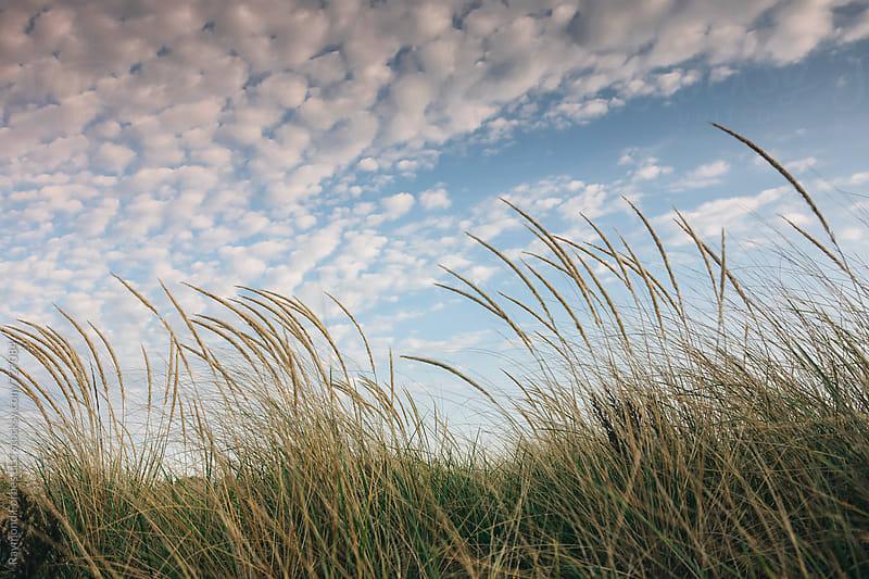 Beach Dune Grass in Autumn Massachusetts by Raymond Forbes LLC for Stocksy United