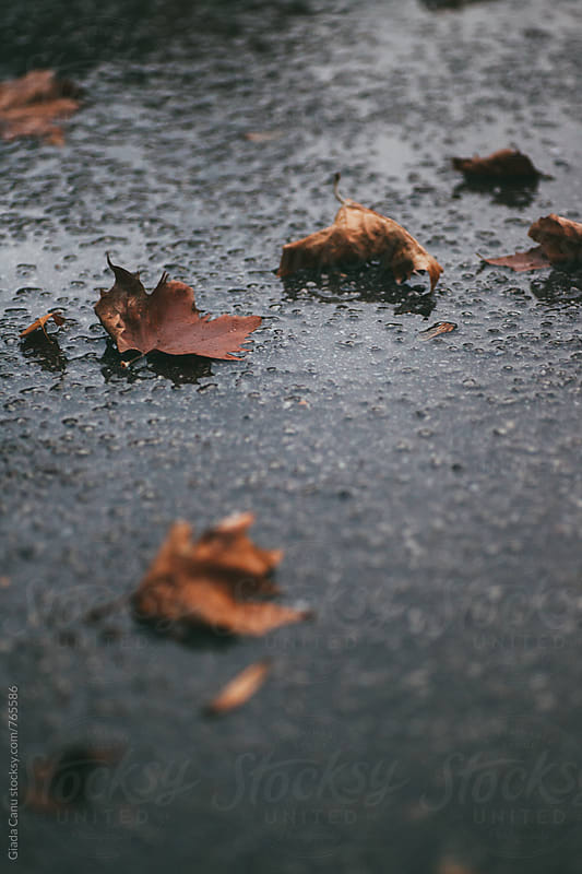 Autumn leaves under the rain by Giada Canu for Stocksy United