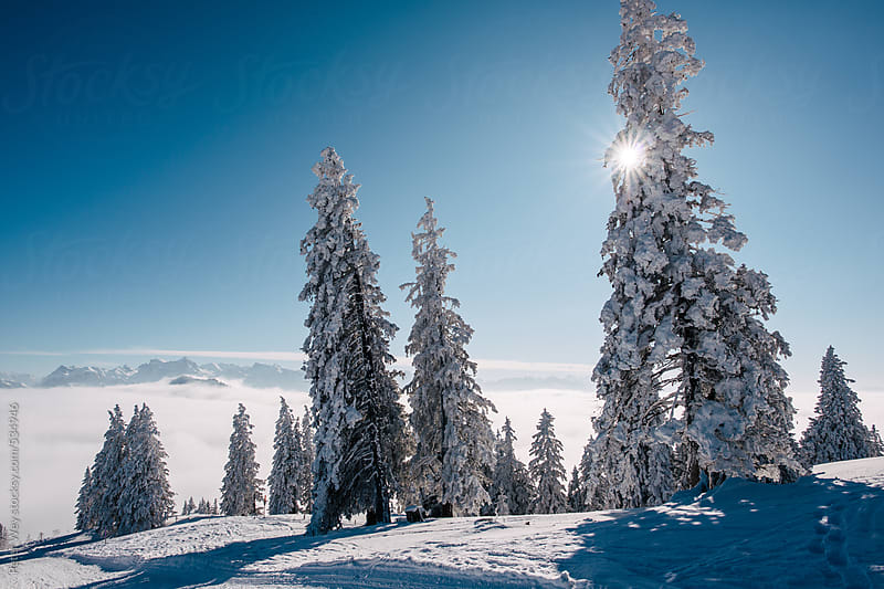 Snow covered trees on Mount Rigi by Peter Wey for Stocksy United