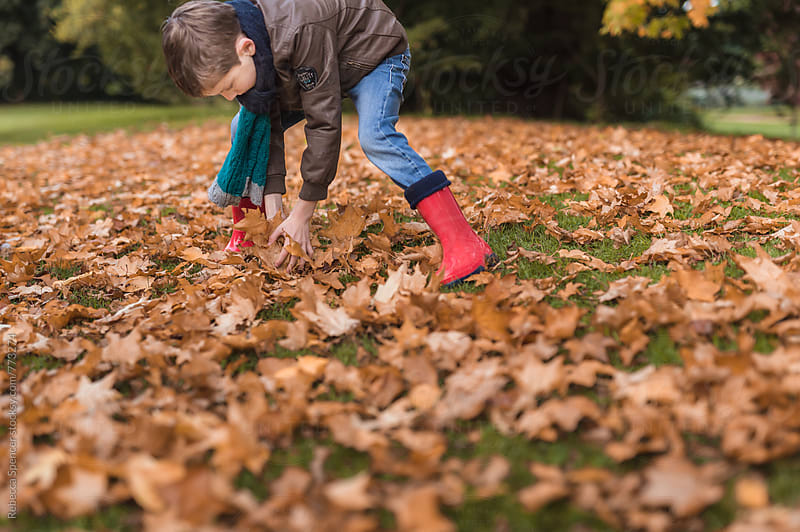 Child gathers up fallen autumn leaves by Rebecca Spencer for Stocksy United