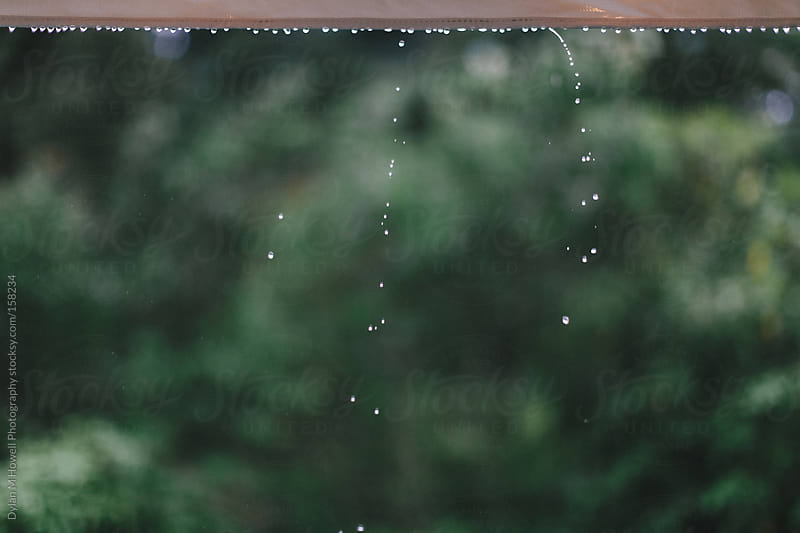 Rain drops by Dylan M Howell Photography for Stocksy United