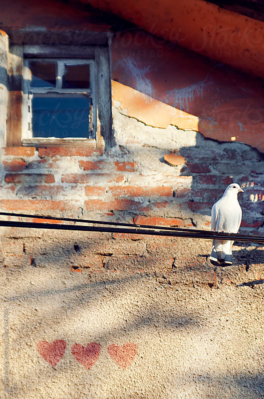 White pigeon on wire with three hearts on facade by Marija Anicic for Stocksy United