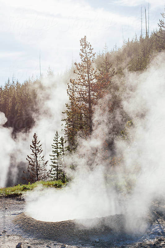 Trees in a geothermal area in the Yellowstone National Park by michela ravasio for Stocksy United