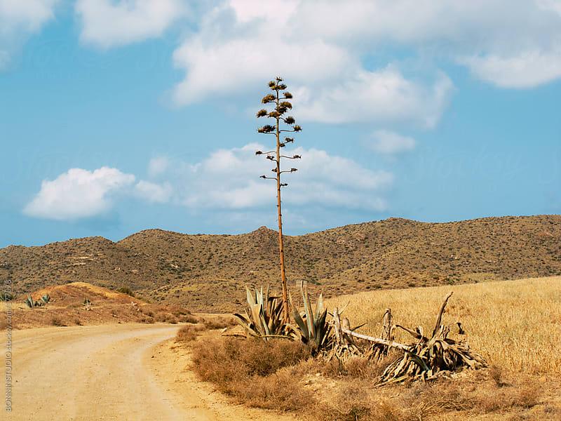 Summer landscape of el Cabo de Gata, Almeria. Spain. by BONNINSTUDIO for Stocksy United