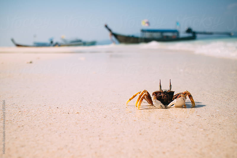 Crab on the shore of the sea by michela ravasio for Stocksy United