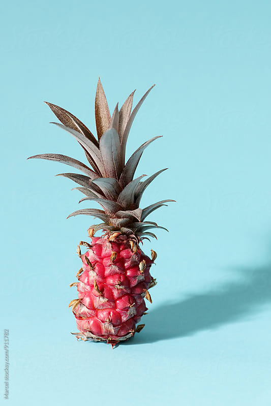 Exotic miniature pineapple by Marcel for Stocksy United