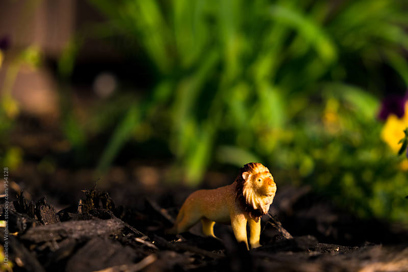 Miniature Plastic Lion in nature by J Danielle Wehunt for Stocksy United