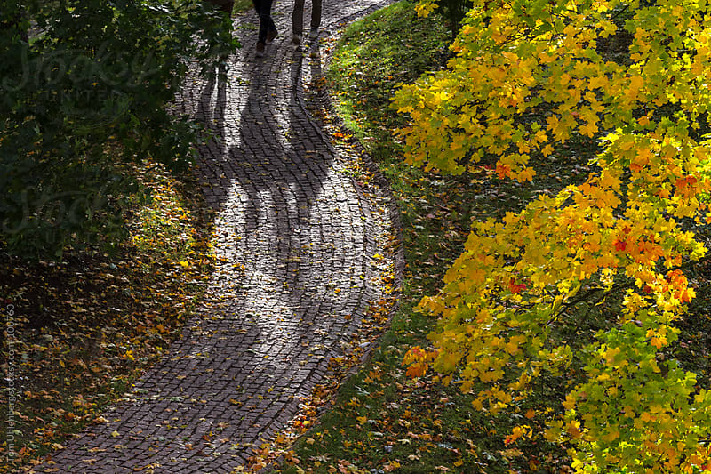 October Foliage and Cobblestone Path by Tom Uhlenberg for Stocksy United