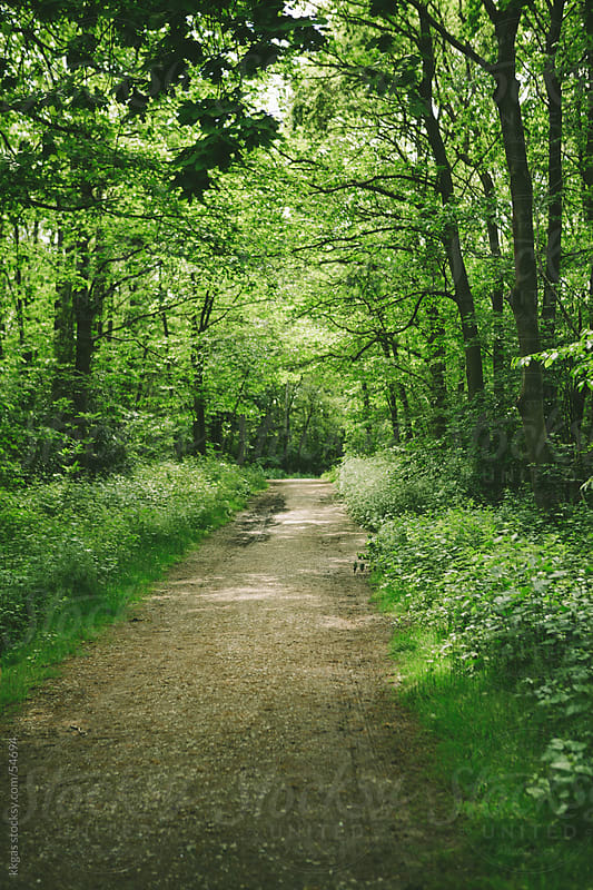 Path through a nature reserve. by kkgas for Stocksy United