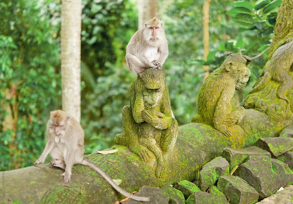 Image result for ubud monkey forest