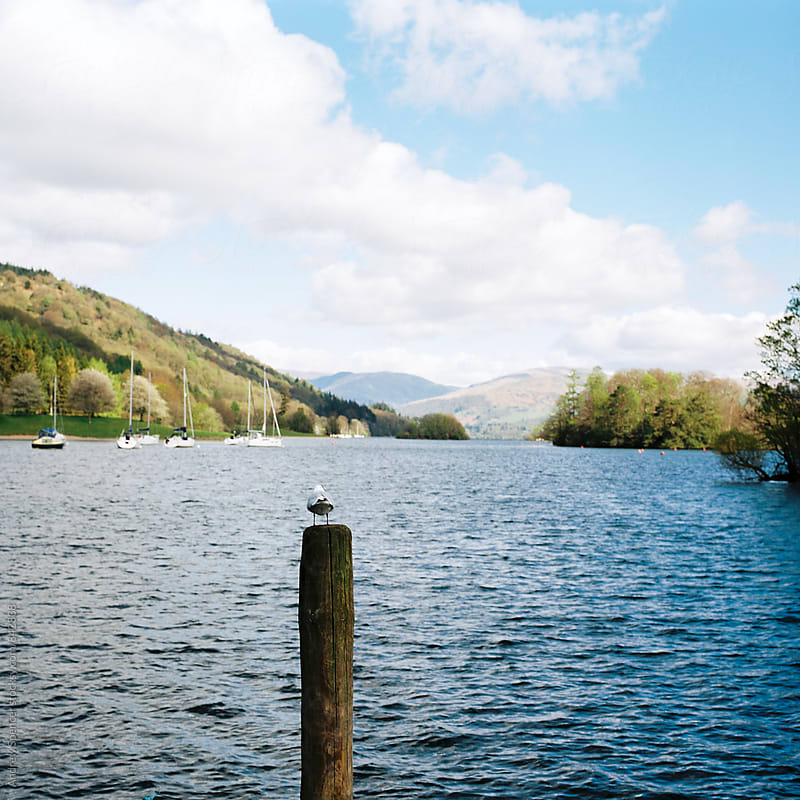 A bird admiring the view in the Lake District by Andrew Spencer for Stocksy United